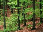 Лес в Кольмордене