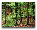 Кольморден: Лес в Кольмордене