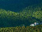 Крыница-Здруй: Море леса