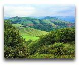 Ленкорань: Чайные плантации