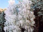 Район Молетай: зима