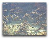 Нурата: Пресное озеро с рыбой