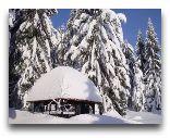 Поляница-Здруй: Зима