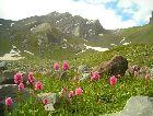 Рача: Альпийский луг
