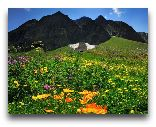 Рача: Альпийские луга