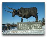 Раквере: Скульптура буйвола