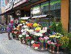 Рига: Весенние цветы в Риге