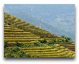 Сапа: Красивые поля в городе Сапа