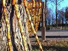 Сигулда: Знаменитые трости - символ Сигулды