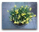 Стокгольм: Весенние цветы