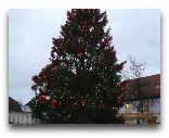 Таллинн: Новогодняя елка