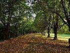 Тойла: Аллея парка