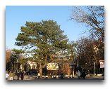 Трускавец: Улица в Трускавце