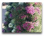 Вентспилс: Цветы