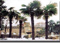 Новый год в Азербайджане 2012: зима в Баку